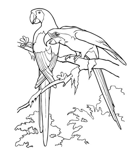 Macaw Coloring Pages Printable