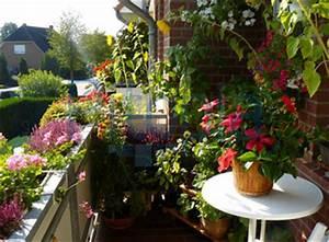 pflanzen balkonwunder With französischer balkon mit regenschirm als sonnenschirm benutzen
