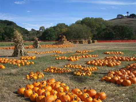 Fresno Pumpkin Patch by Pick Of The Patch Pumpkins