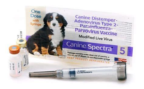 give  dog shots  home