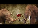 Woolly Rhinoceros Pair vs Woolly Mammoth - YouTube