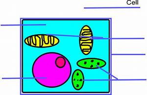 Basic Plant Cell Unlabeled Clip Art At Clker Com