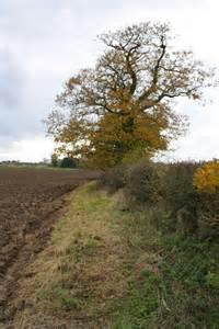 Oak Tree Field