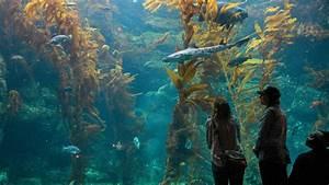 Choosing A Major La Jolla 39 S Birch Aquarium Explores Major Expansion The