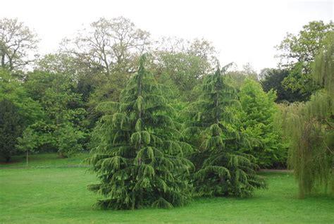 ornamental conifers ornamental conifers sydenham wells park 169 n chadwick geograph britain and ireland