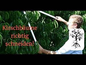 Kirschbaum Richtig Schneiden : kirschb ume richtig schneiden der kirschbaumschnitt leicht erkl rt youtube ~ Frokenaadalensverden.com Haus und Dekorationen