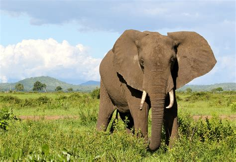 Thomas Cook Have Stopped Promoting Elephant Rides And. Sample Kitchen Designs. Grey Kitchen Design Ideas. Small Kitchen Island Design. Most Modern Kitchen Design. Voila Institute Of Hair Design Kitchener. Design Small Kitchens. Backsplash Designs For Kitchen. Design Kitchen Chicago