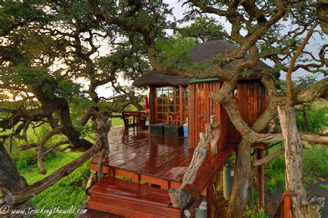 Mokala's Treehouse With A View  Africa Geographic