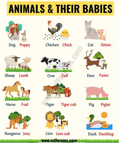List of Animals: A Big Lesson of Animal Names with the