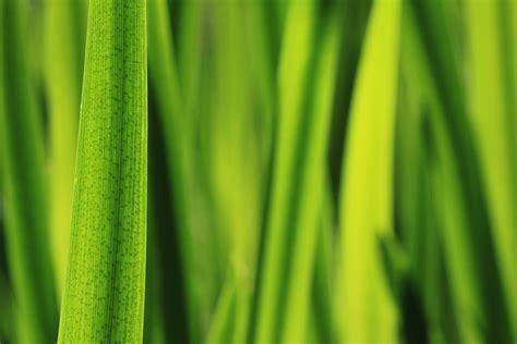 Die Farbe Grün by Die Farbe Gr 252 N Foto Bild Pflanzen Pilze Flechten