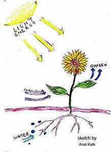 Photosynthesis Explained With A Diagram