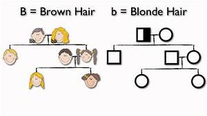 What are Pedigree Charts - YouTube