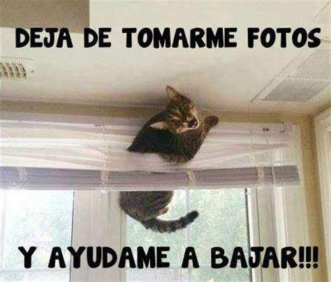 Memes De Gatos - memes de gatos