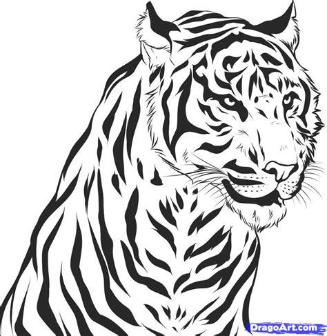 draw  realistic tiger draw real tiger step