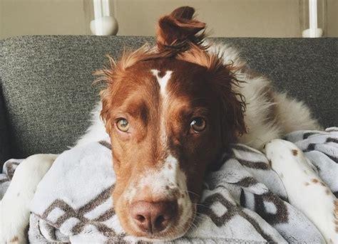 dangerous fur styling  bark