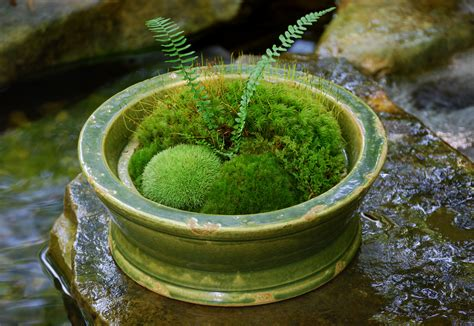 where to buy moss for terrariums making moss terrariums or not moss and stone gardens