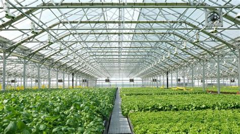 Garden To Grow Going Green Mill by Farm Coming To Former Sparrows Point Steel Mill Site