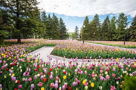 montreal botanical gardens gardenartsshow