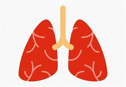 Lungs Cartoon Lung Respiratory Clipart System Icon