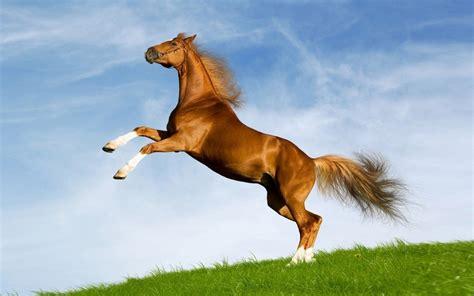 horse hd widescreen stunning desktop wallpapers13