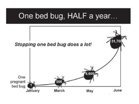 do bed bugs come out when the lights are on do bed bugs come out during the day do bed bugs come out