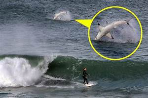 Incredible Snap Taken Moment Great White Breaches Behind