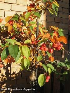 Geranien Gelbe Blätter : silber rosen aus herbstlaub ~ Orissabook.com Haus und Dekorationen