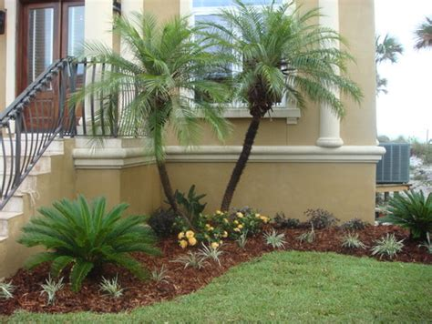 what is the small palm like quot bush quot in front of the trees
