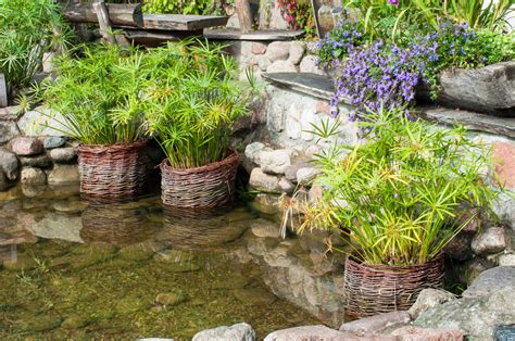 building a water garden rapid city nursery growing tips