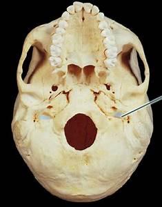 jugular foramen and carotid canal