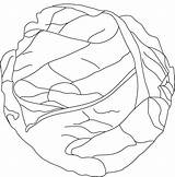 Cabbage Coloring Pages Lettuce Drawing Template Fresh Printable Sketch Templates Vegetable Carrot Green Getdrawings Getcolorings Popular Leaf Print sketch template