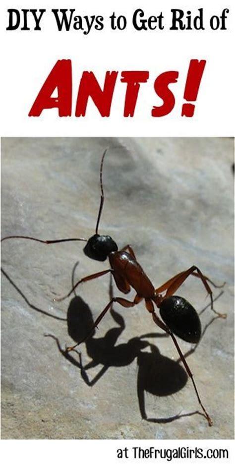 diy ways   rid  ants  thefrugalgirlscom