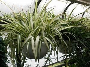 Grande Plante D Intérieur Facile D Entretien : plantes d 39 int rieur faciles d 39 entretien ~ Premium-room.com Idées de Décoration