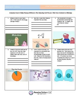 amoeba sisters mitosis worksheet geotwitter kids activities