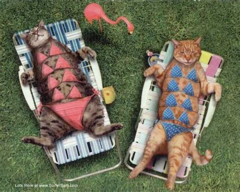 cat swimsuit cat pictures with captions with guns with quotes