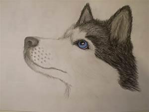 Siberian Husky By Mustavuona On Deviantart