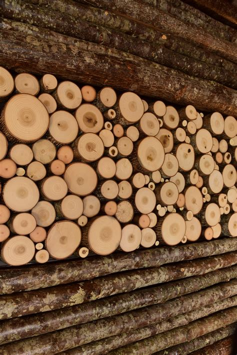 tree trunk wall art  cut wood wall bark house