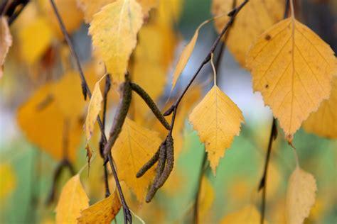 Pirmdien Latvijā kļūs saulaināks. Kādu rudeni sola laika ...