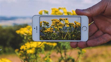 pflanzen bestimmen mit foto app tipps blumen bestimmen und schatzsuche per geocaching