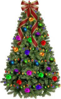 Asda Real Christmas Trees