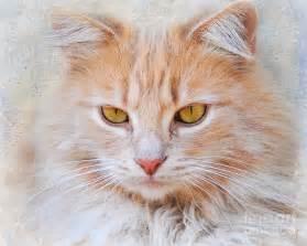 tabby cat orange orange tabby cat photograph by jai johnson