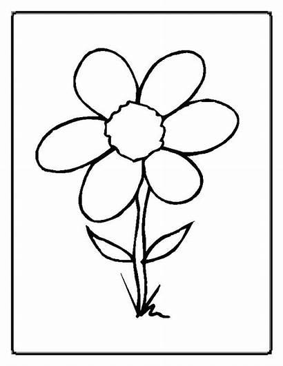 Flores Colorear Dibujos Imprimir
