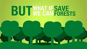 Save Paper to Save Forests - YouTube