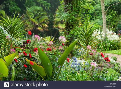 tropical gardens images abbotsbury sub tropical gardens dorset stock photo royalty free image 31752230 alamy