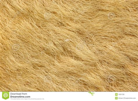fur  kangaroo rug stock photo image