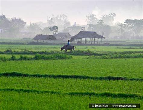 Nyaungshwe, Burma (Myanmar) - Rice field in Burma (Myanmar ...