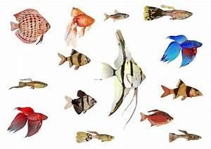 Aquarium Einrichten Erste Schritte Pflanzen