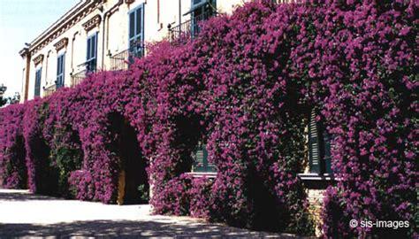 Piante Per Coprire Muri by Piante Per Coprire Muri