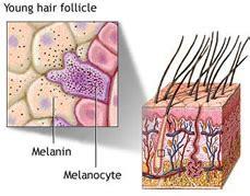 hair turn gray everyday mysteriesfun science