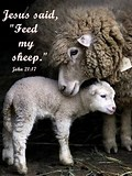 Image result for Feed My Sheep Scripture